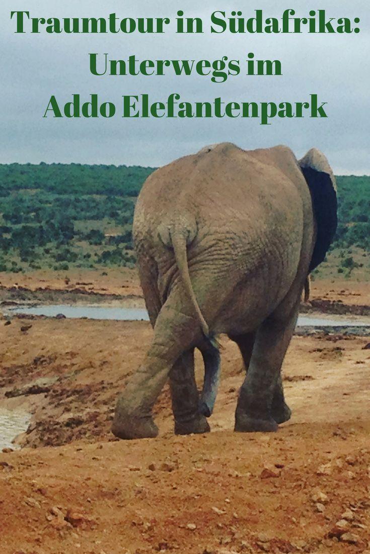 Für mich ist es einer der schönsten Orte der Welt: Der Addo Elefantenpark an der Garden Route in Südafrika. In meinem Beitrag nehme ich Euch mit auf die Safari!