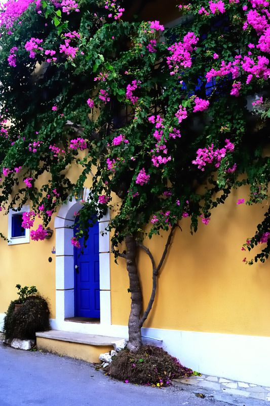 Perfect Mediterranean Colours + Stunning Bougainvillea - This Would Be The Most Beautiful Entrance Way ~