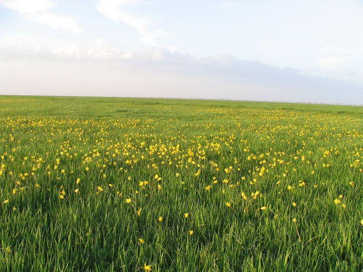 Цветущая степь в Аскании-Нове фото
