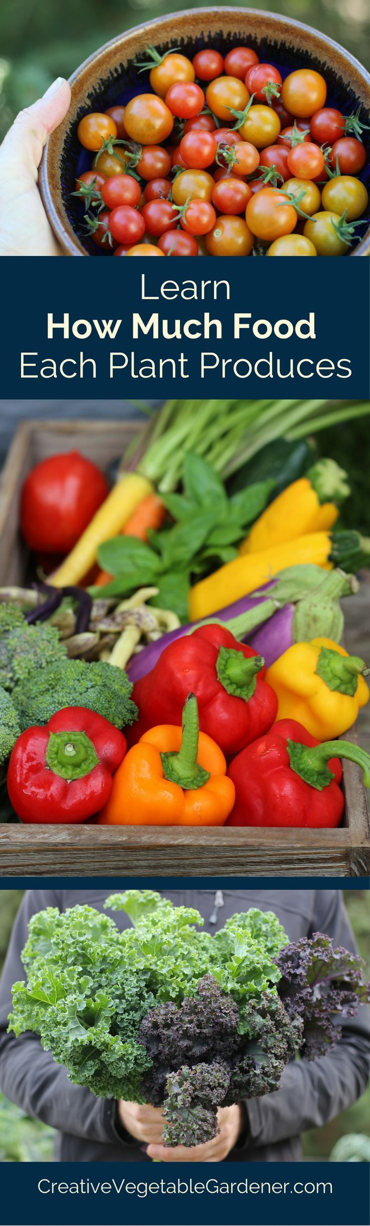 When you know how much food each vegetable produces it helps you decide whether you want to grow it in your garden.