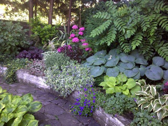 69 best ideas about garden on pinterest gardens hosta for Woodland shade garden designs