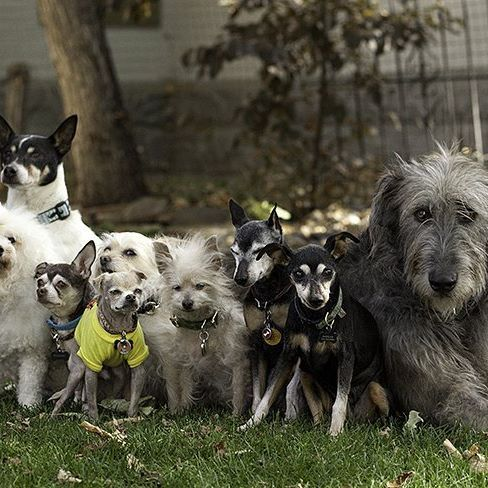 Another beautiful picture taken when @senior_dogs_across_america visited the house. Edna, Josh, Eeyore, Loretta, Englebert, Phyllis, Hercules, Maddie and Enoch.