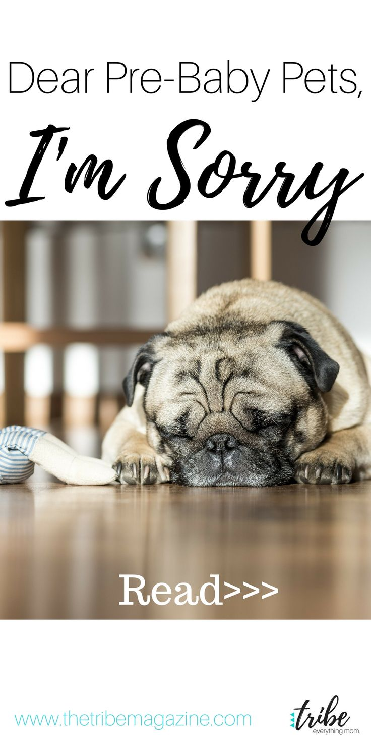 A Letter to My Dogs Now that I have a real baby.  http://thetribemagazine.com/dear-pre-baby-pets-im-sorry/