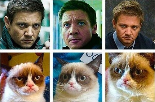 Jeremy Renner and Grumpy Cat!