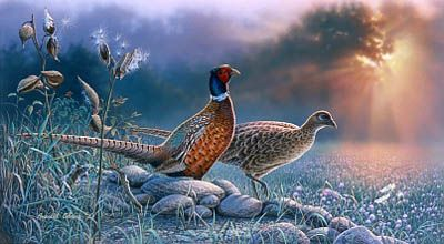 Cobane Studio: Evening Meadow  12 X 21 (inches) print size  wrapped canvas Giclee Print; pheasant; copyrighted artwork