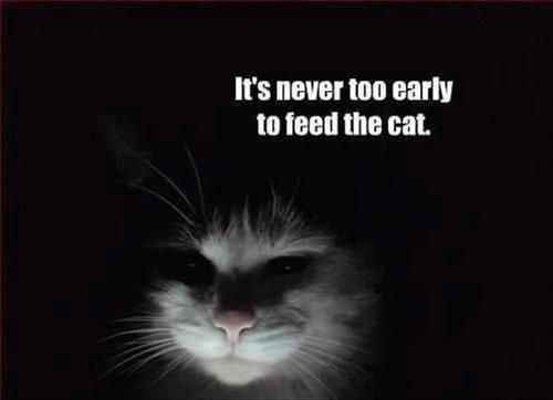 Cats don't care what you're doing if they're hungry..they have to be fed that instant