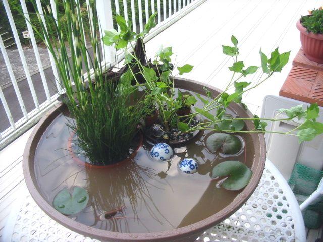 Patio biotope aquarium wabi kusa terrarium garden for Outdoor aquarium pond planter