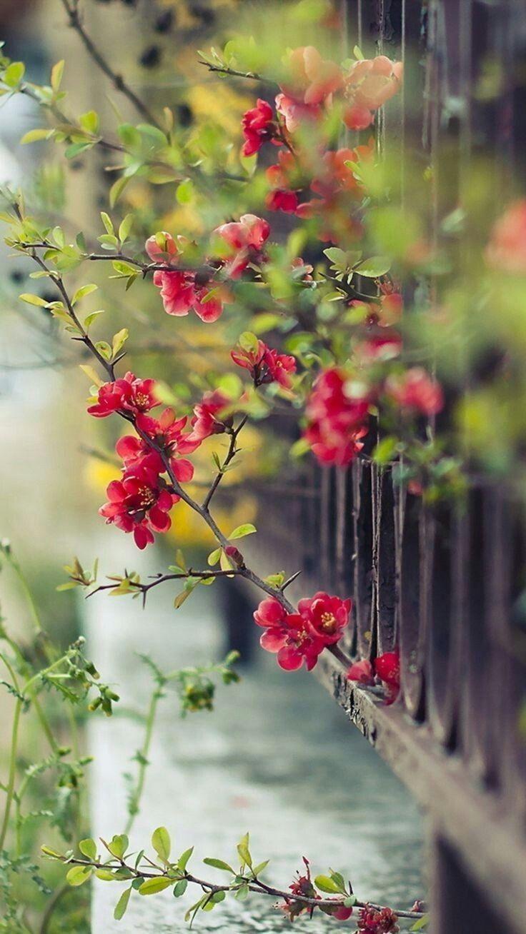 Gor Beni Ben Seni Sevdigim Zaman Bu Sehirde Yagmurlar In 2021 Beautiful Images Nature Beautiful Photography Nature Flowers Nature Flower wallpaper nature pictures