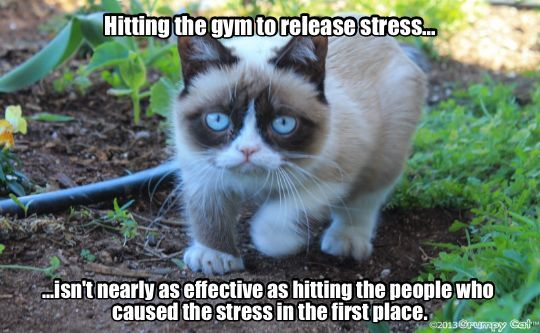 PE 101 with Coach Grumpy! | Cattitude Personified ...