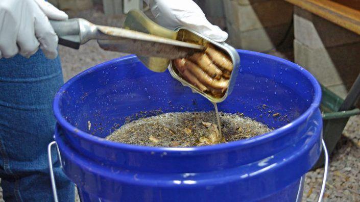 Best Homemade Fish Emulsion