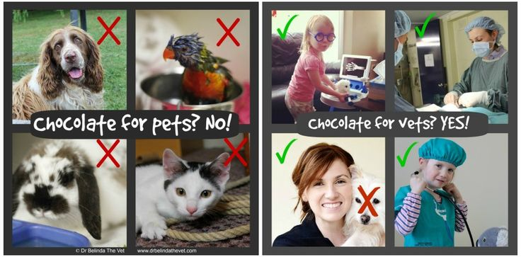 #Chocolate for #pets? NO! Chocolate for #vets? YES!