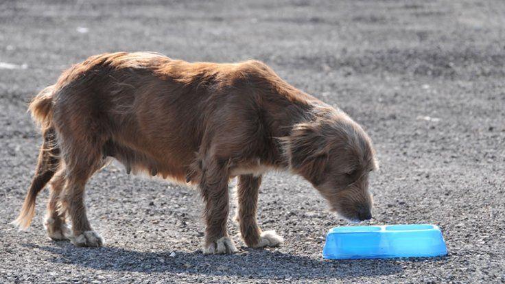 Gazete Duvar ///  Aktivistler hayvan hakları yasasını protesto ediyor