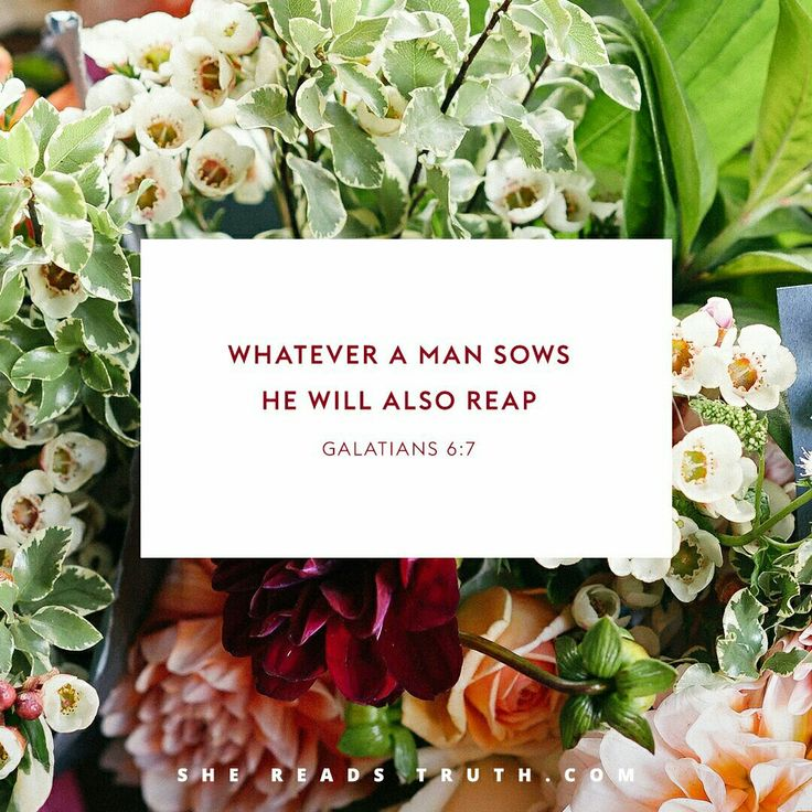 Hosea Day 10 #SheReadsTruth