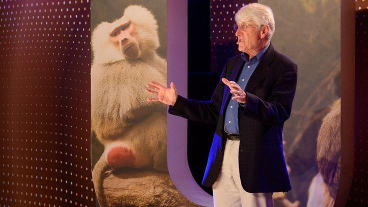 Bonobo-apen gebruiken seks als sociaal bindmiddel. Niet alleen de mannetjes, maar ook de vrouwtjes stimuleren elkaar seksueel. Betekent dat dan dat homofilie ook voorkomt in het dierenrijk? Wil je meer weten? Als je enthousiast bent geworden, kun je bij Kennislink meer over dit onderwerp lezen. Bij de kemphanen blijken zich niet twee maar zelfs drie typen mannetjes te manifesteren, die niet alleen wat betreft uiterlijk en gedrag, maar ook genetisch van elkaar verschillen. Lees meer.