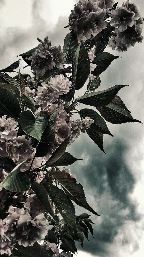 Flowers of may - waiting for the storm by just go on 500px