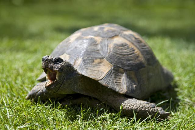 Everything You Should Know About Owning a Pet Tortoise
