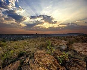 melville koppies - Google Search