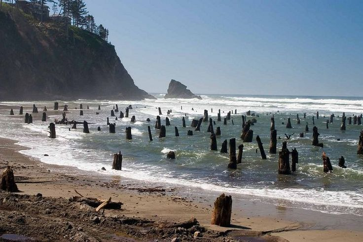 """coastal town of Neskowin in Tillamook County, Oregon, United States, somewhere between Lincoln City and Pacific City, are the remains of an ancient Sitka spruce forest. For nearly 300 years, the stumps of the """"ghost forest"""" had been hiding under the sand until they were unearthed in the winter of 1997-98, when a fierce storm lashed the Oregon Coast. The storm had eroded away a part of the beach revealing about one hundred barnacle-encrusted tree stumps."""
