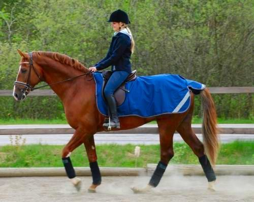 Bucas Riding Rug The Smartex Is Ideal Lightweight And Durable All Weather