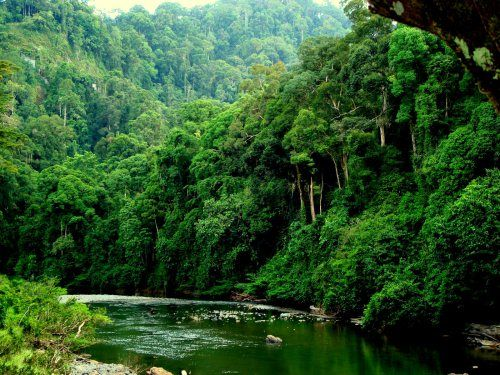 The Danum River in the Danum Valley Conservation Area. This area is comprised of 108,230 acres of pristine virgin rain forest. (Adapted from borneowildandnature.com)