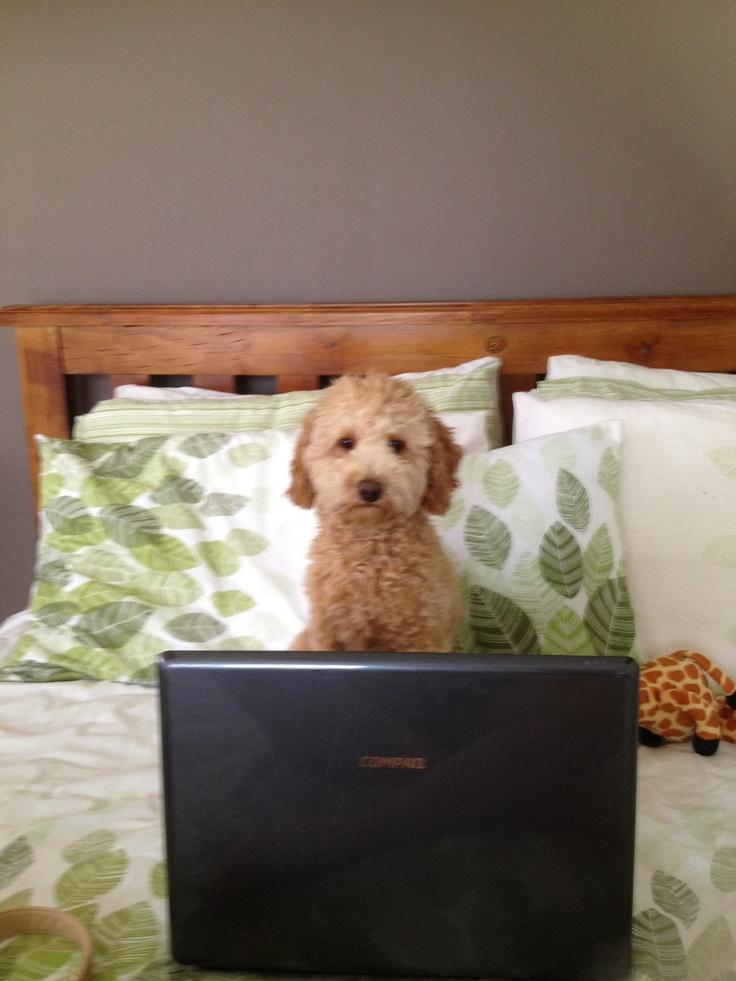 I am one busy dog
