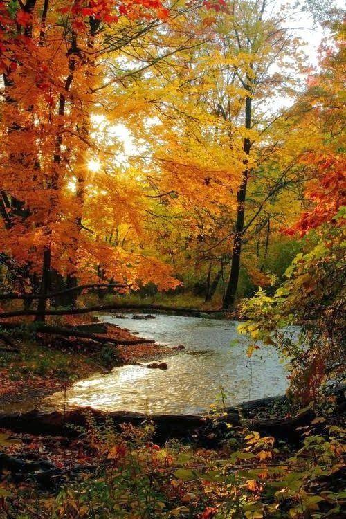 L'automne pour ma balade du mercredi…