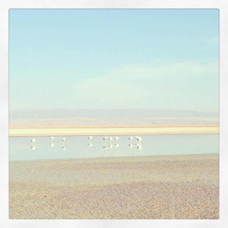 Laguna Chaxa, desierto de Atacama, Chile.
