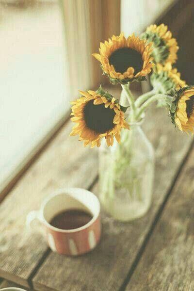 Il sole splende anche quando piove Un caffè Un girasole  Un cibo come stai  O semplicemente  BUON POMERIGGIO A TUTTI  CLICCATE MI PIACE SULLA NOSTRA PAGINA FACEBOOK CLICK ON LIKE OUR FACEBOOK PAGE http://ift.tt/2k9jhAD