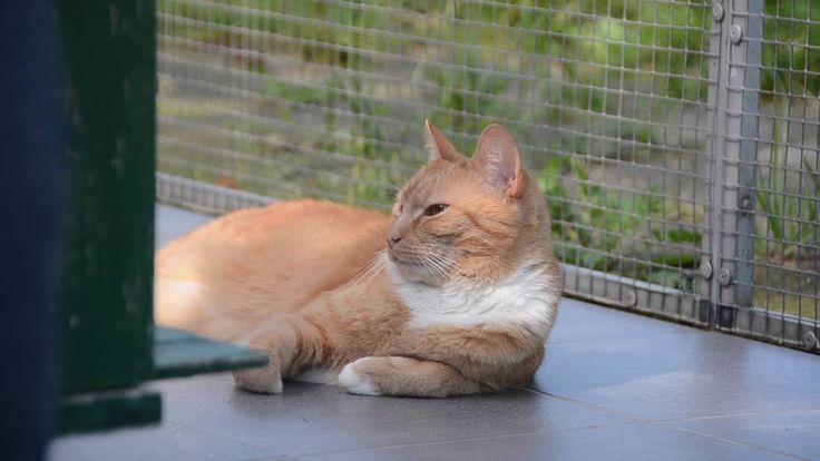 Impressie TTouch cursus voor katten
