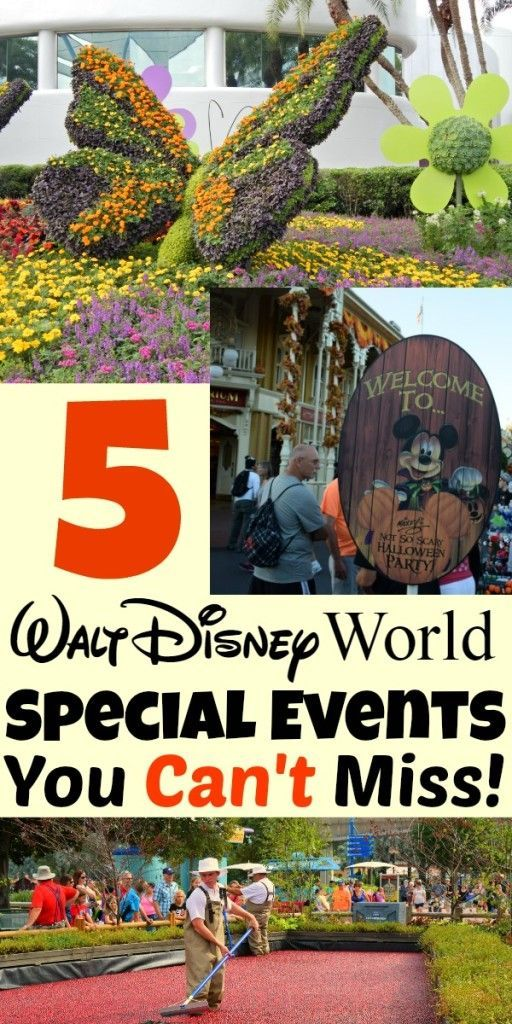 From Mickey's Not-So-Scary Halloween Party to the Epcot International Flower and Garden Festival, no one does special events like Disney. Find out all about special annual events at Walt Disney World in this comprehensive guide.