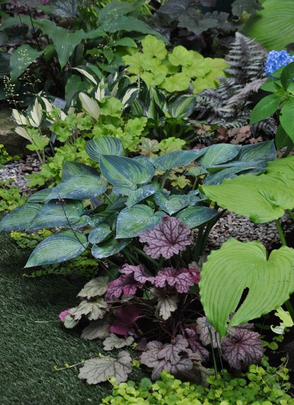 Shade garden with hosta, heuchera, fern, and hydrangea