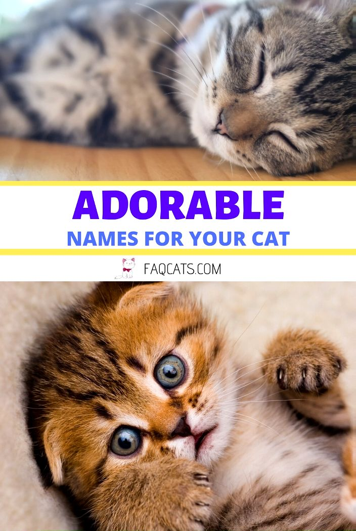120 Adorable Unisex Tabby Cat Names [Video] [Video] in