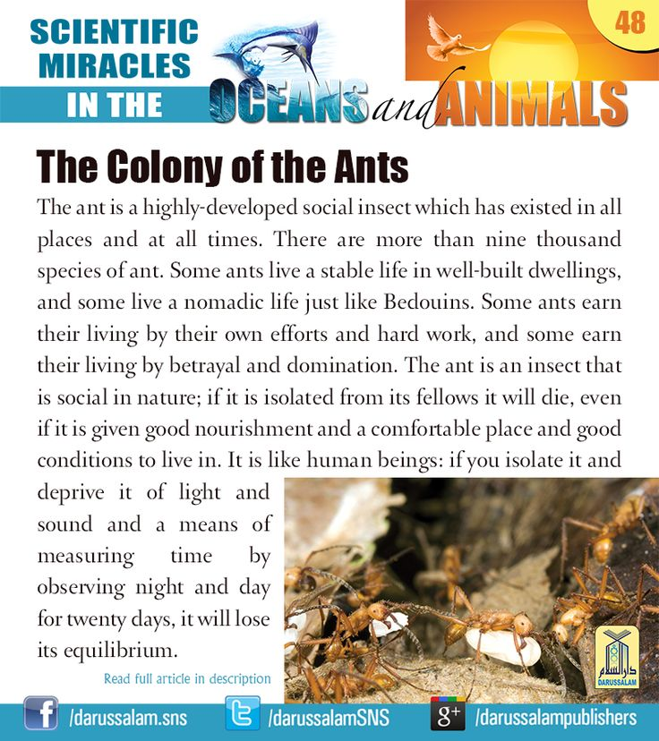 The ant is a highly-developed social insect which has existed in all places and at all times. There are more than nine thousand species of ant. #ScientificMiraclesInTheOceansAndAnimals #DarussalamPublishers #IslamicEBooks #AmazonKindle #KindleStore