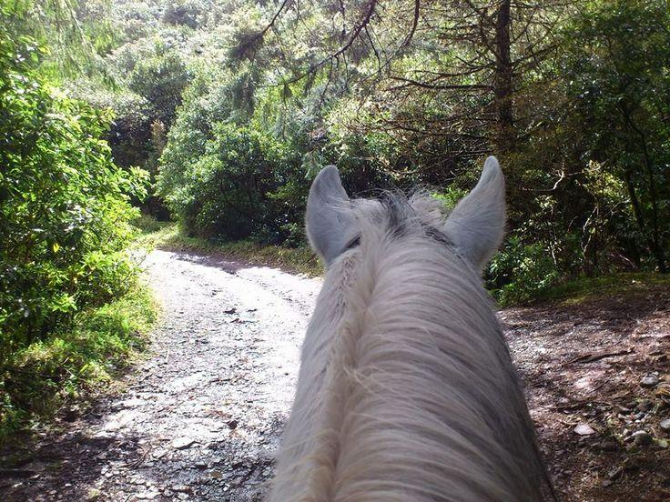 Spring is on break today, but we are not!  #horses #chevaux #pferd #paard #paardrijden #horseriding #equitation #reiten #madeiraisland #laurissilva #fun #thingstodo #leisureriding