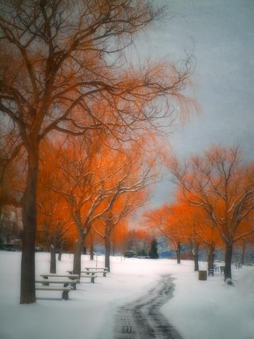 The Colours Of Winter Photograph by Tara Turner - The Colours Of Winter Fine Art Prints and Posters for Sale