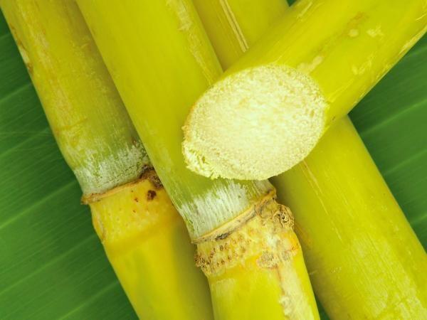 Entre los principales beneficios de la caña de azúcar se encuentran su bajo nivel de colesterol y de índice glucémico. También ayuda en materia de belleza.