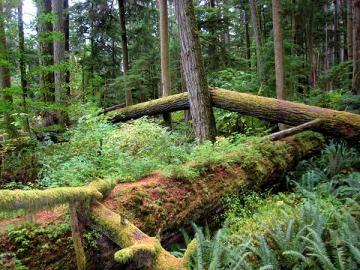 «Дыхание земли». В Канаде обнаружили странное природное явление (ВИДЕО)