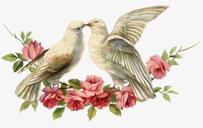 loving pigeons, Pigeon, Animal, Feige PNG Image