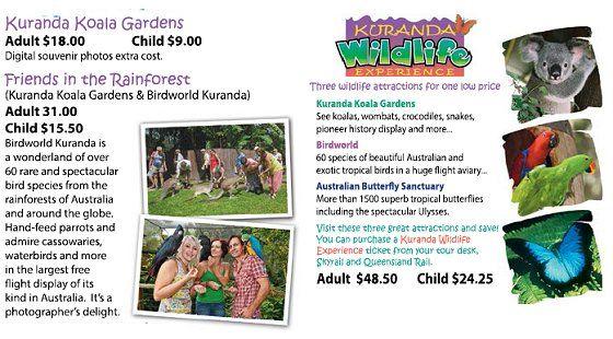 Kuranda Koala Gardens - Cairns Queensland - cuddle koalas and feed kangaroos!!!