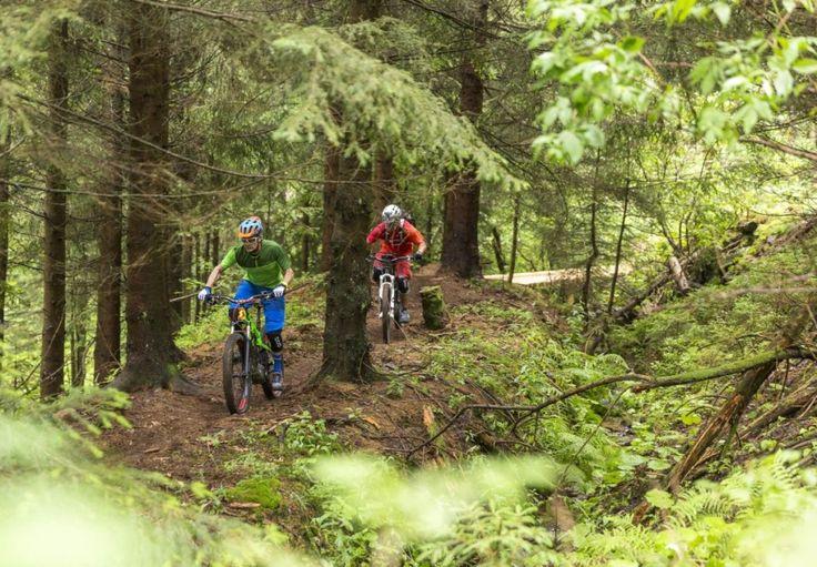 Uphill Flow Trail im Bikepark Geißkopf