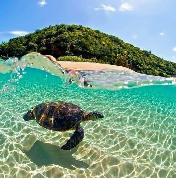 zakynthos, marathonisi (turtle island) Figi / Travel Oceania