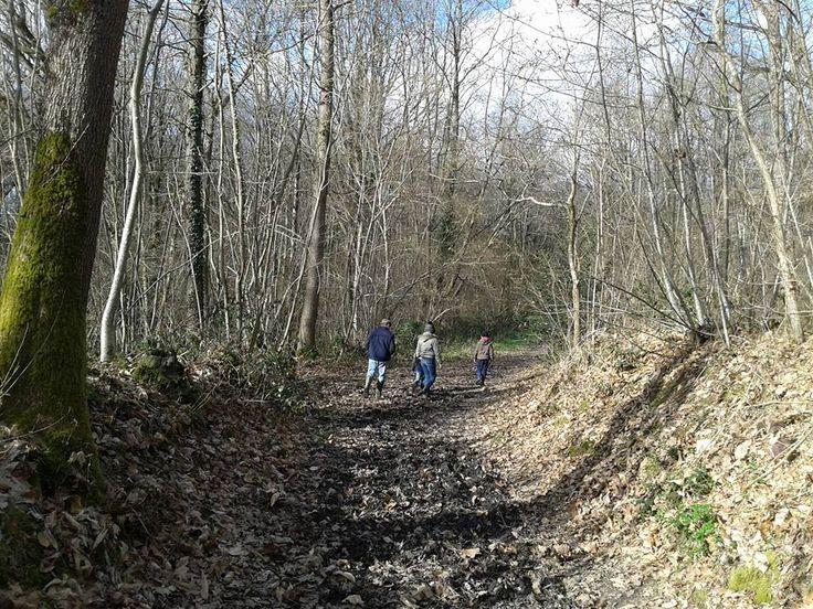 Promenade sous le soleil, au bois de la Jeunerie à Brissarthe, site apprécié par les randonneurs et les habitants qui viennent y courir ou s'y promener en famille.