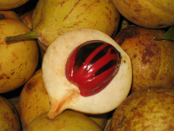 <p>The+nutmeg+tree+is+cultivated+for+its+fruits+which+are+used+for+two+different+spices:+nutmeg+and+mace.+Nutmeg+is+the+seed+of+the+tree,+while+mace+is+the+reddish+aril,+a+lace-like+covering+of+the+seed.</p>