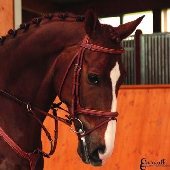shop.horse-green.com #butetsellier#butetitalia#sellebutet#testierabutet#butet#sellebutet