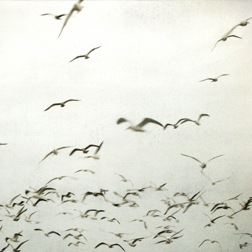 Flying   Black and White photograph Fine Art by GrainnePhotography, $25.00