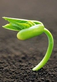 Ключи Мастерства » Новолуние в Овне | Я могу СДЕЛАТЬ это!