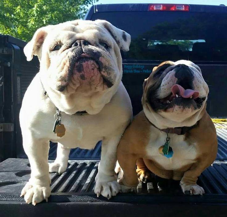 (2) Baggy Bulldogs