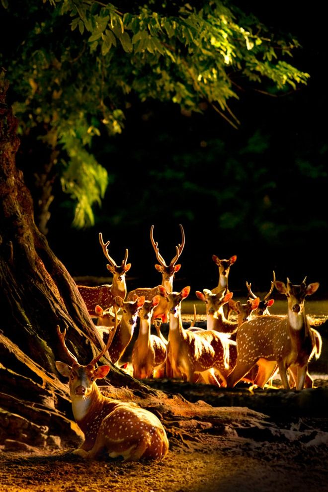 Deer gathering in the night forest. What a beautiful photo!