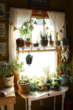 This is exactly what a plant addiction looks like. And this is only one window in my house. Send help.