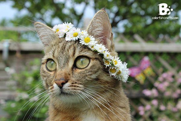 Daisy_Crown_16